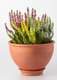 Bloemen in een pot Stock Foto