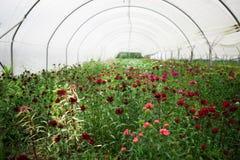 Bloemen in een Serre Stock Foto