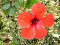 Bloemen in een tropisch park. Stock Foto's