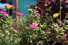 Bloemen in een tuin Royalty-vrije Stock Foto's