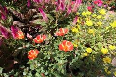 Bloemen in een tuin Stock Afbeeldingen