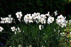 Bloemen in een tuin stock foto