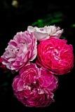 Bloemen in een tuin Stock Afbeelding