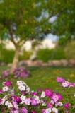 Bloemen in een tuin Stock Foto's