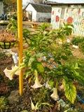 Bloemen in een werf van het land Royalty-vrije Stock Afbeelding