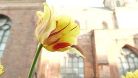 Bloemen in een wind 4k UHD stock footage