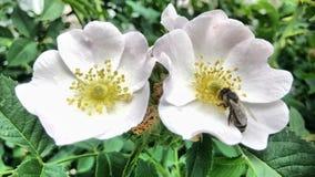Bloemen en één heldere de lentedag die bloeien royalty-vrije stock fotografie