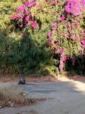 Bloemen en aap royalty-vrije stock afbeeldingen