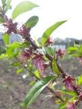Bloemen en aard, en groen stock afbeeldingen