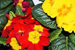 Bloemen en appreciatie stock afbeeldingen