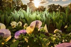 Bloemen en beeldhouwwerken in het stadspark bij zonsondergang stock afbeelding