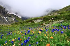 Bloemen en bergen. Stock Fotografie