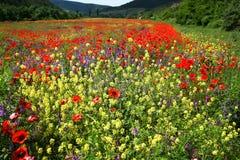 Bloemen en bergen Royalty-vrije Stock Afbeeldingen