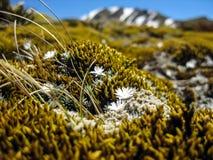 Bloemen en bergen Stock Foto