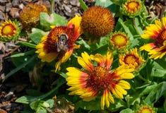 Bloemen en bij Stock Foto