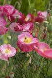 Bloemen en bij Royalty-vrije Stock Fotografie
