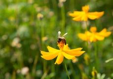 Bloemen en bijen. Royalty-vrije Stock Afbeeldingen