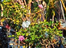 Bloemen en binneninstallaties in de serre in de winter stock afbeeldingen