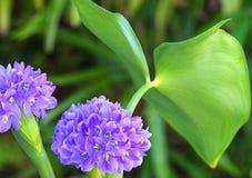 Bloemen en blad Stock Afbeelding