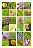 Bloemen en bladeren stock foto's