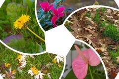 Bloemen en bladeren stock foto