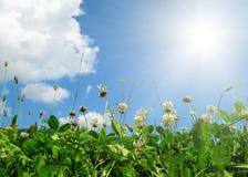 Bloemen en bladeren op blauwe hemel Stock Afbeelding