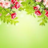Bloemen en bladeren op groene achtergrond Royalty-vrije Stock Fotografie