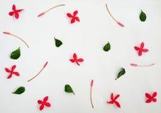 Bloemen en bladerenpatroon Stock Fotografie