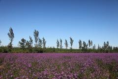 Bloemen en blauwe hemel Royalty-vrije Stock Foto's