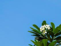 Bloemen en Blauwe Hemel Stock Afbeelding