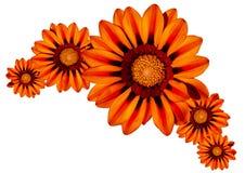 Bloemen en bloemen Stock Afbeelding