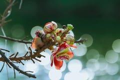 Bloemen en bokeh stock fotografie