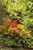 Bloemen en bomen Stock Foto's