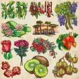 Bloemen en bomen rond de wereld - een hand getrokken inzameling, F royalty-vrije illustratie