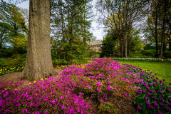 Bloemen en bomen in Sherwood Gardens Park, in Baltimore, Maryla Royalty-vrije Stock Foto's