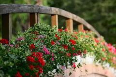 bloemen en brug   Royalty-vrije Stock Foto