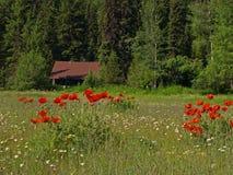 Bloemen en Cabine stock afbeelding