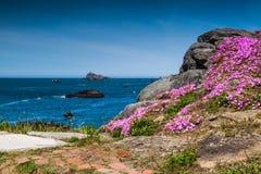 Bloemen en de oceaan Royalty-vrije Stock Fotografie