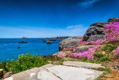 Bloemen en de oceaan Stock Fotografie