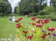 Bloemen en de weiden royalty-vrije stock fotografie