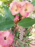 Bloemen en doornen royalty-vrije stock foto's