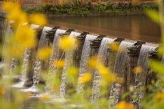 Bloemen en Draken Stock Fotografie
