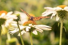 Bloemen en een monarchvlinder met open vleugels royalty-vrije stock afbeelding