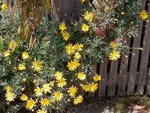 Bloemen en een omheining Royalty-vrije Stock Fotografie
