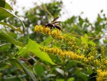 Bloemen en een wesp stock afbeeldingen