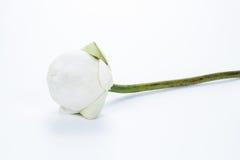 Bloemen en geloof Stock Foto