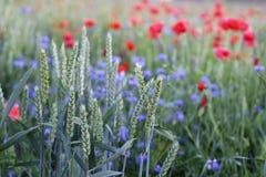 Bloemen en gerst Royalty-vrije Stock Afbeelding