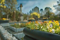 Bloemen en Grafstenen royalty-vrije stock foto