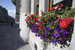 Bloemen en graniet Stock Foto