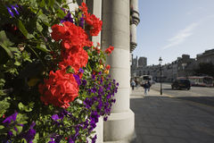 Bloemen en graniet Stock Afbeelding